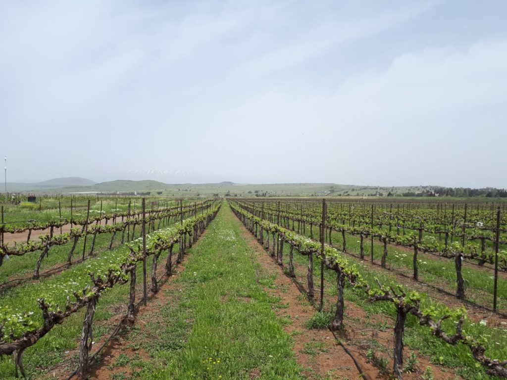 Irrigation solutions -grapes open fields project with irrigation solutions