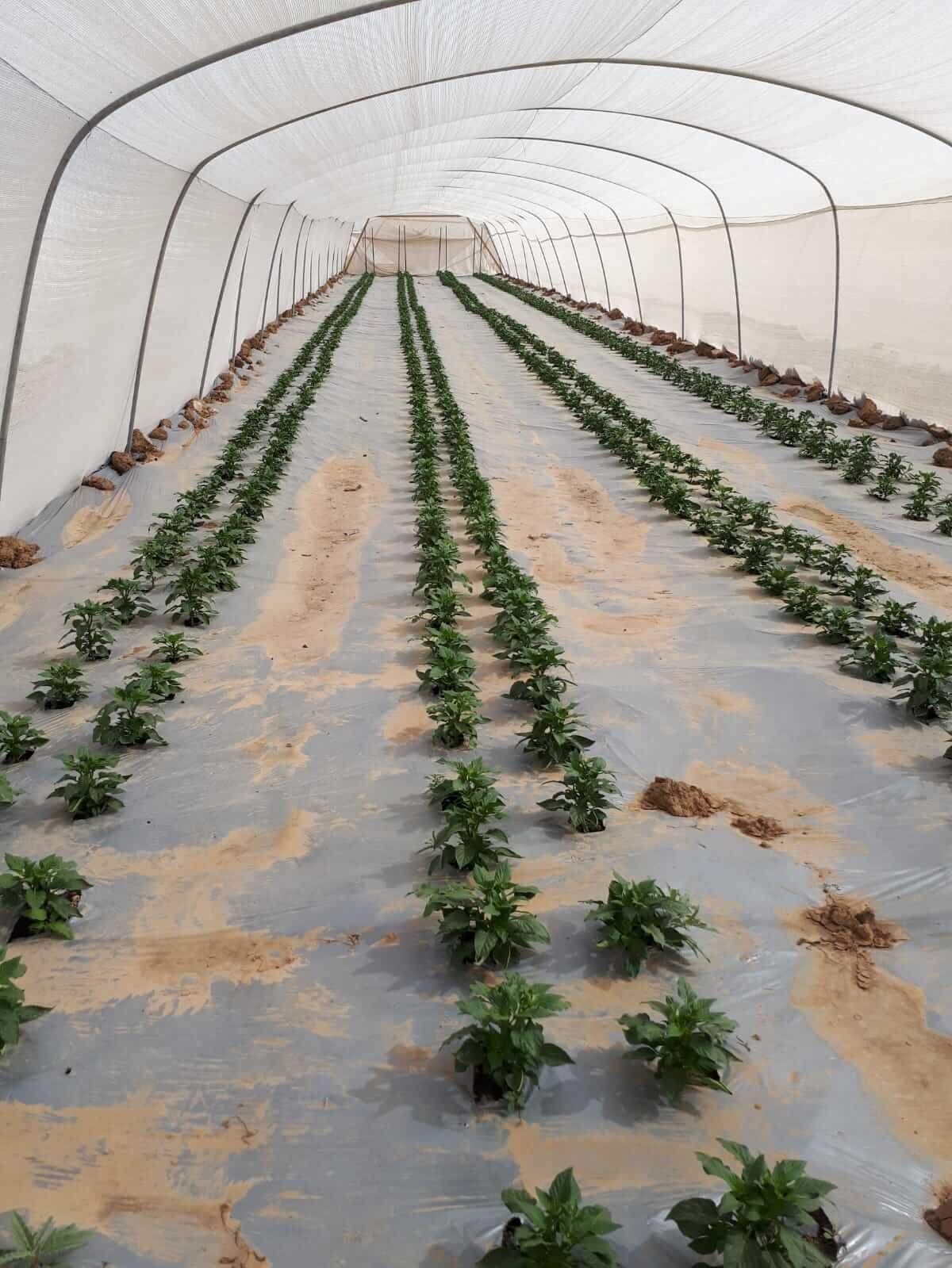 Turnkey projects in farmers greenhouses