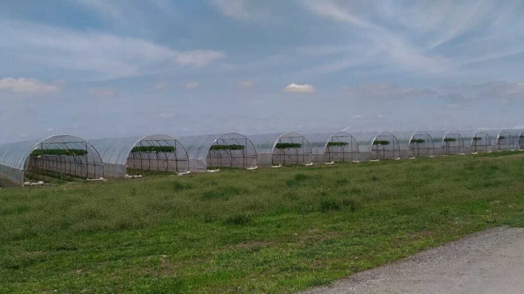 Irrigation solutions : Turnkey projects in farmers greenhouses