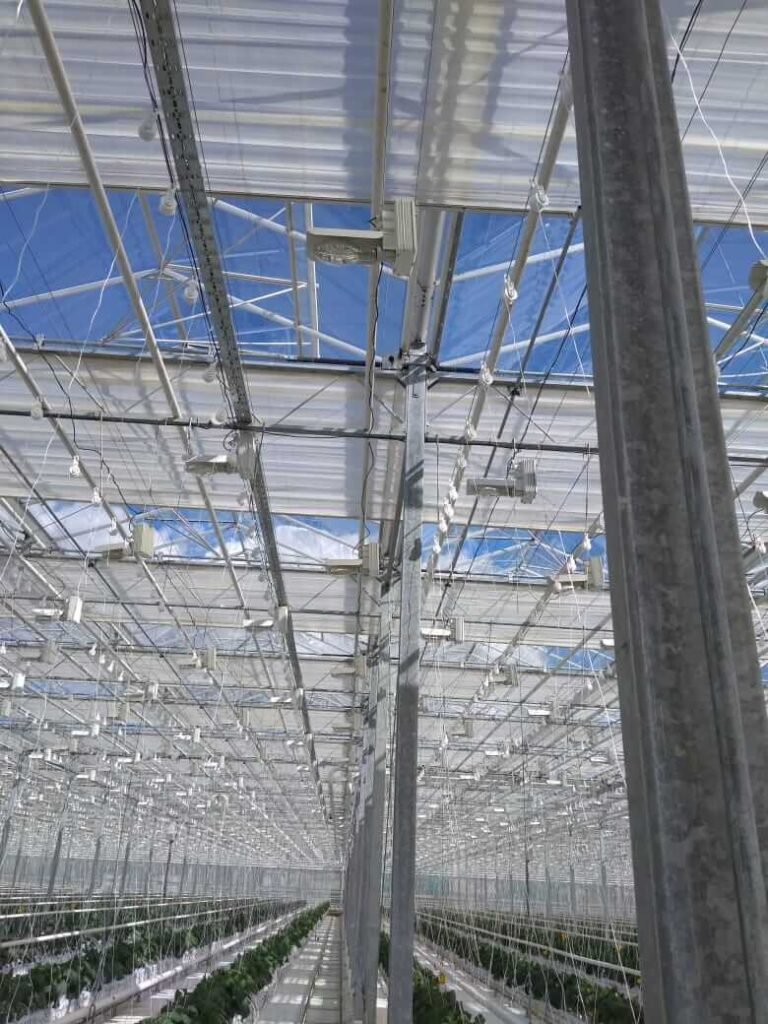 Automatic system of windows closing and lighting in a greenhouse. Turnkey projects