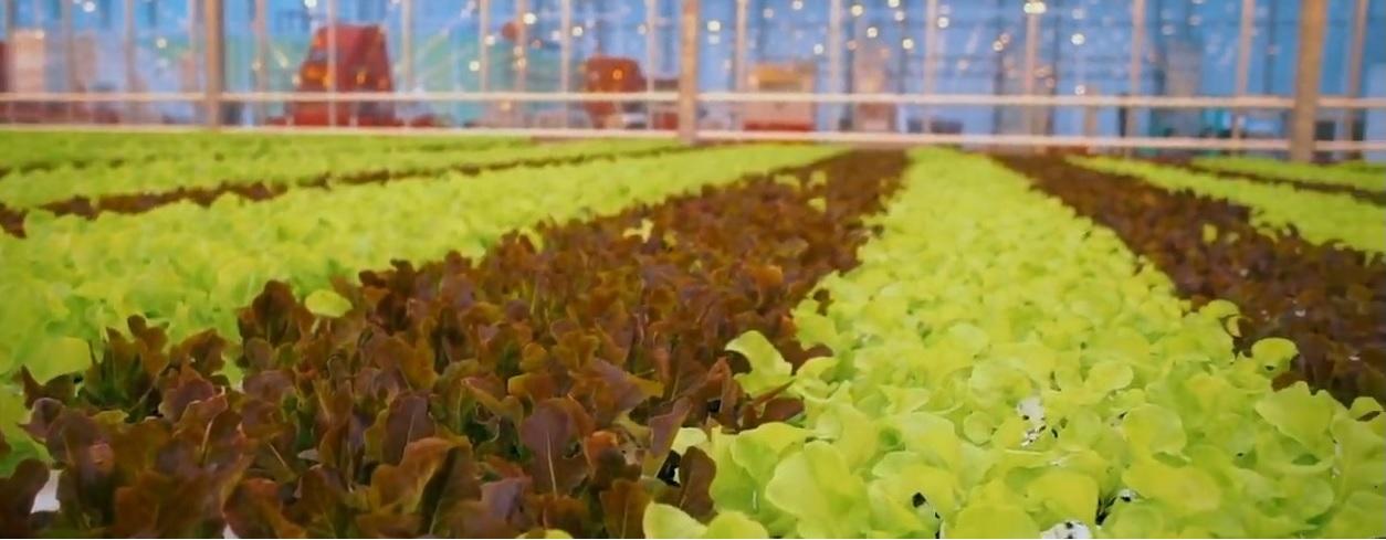 irrigation blog - Nigma ltd