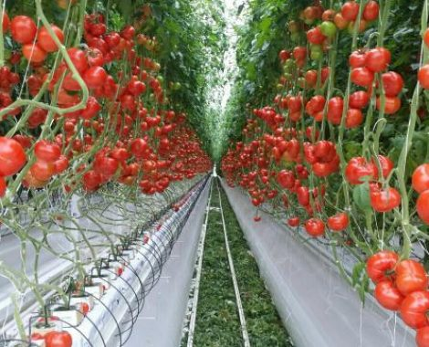 irrigation solutions in greenhouses project Lipetsk-agro greenhouse