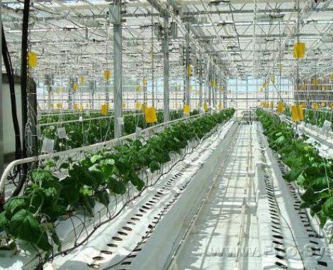 irrigation solutions in greenhouse